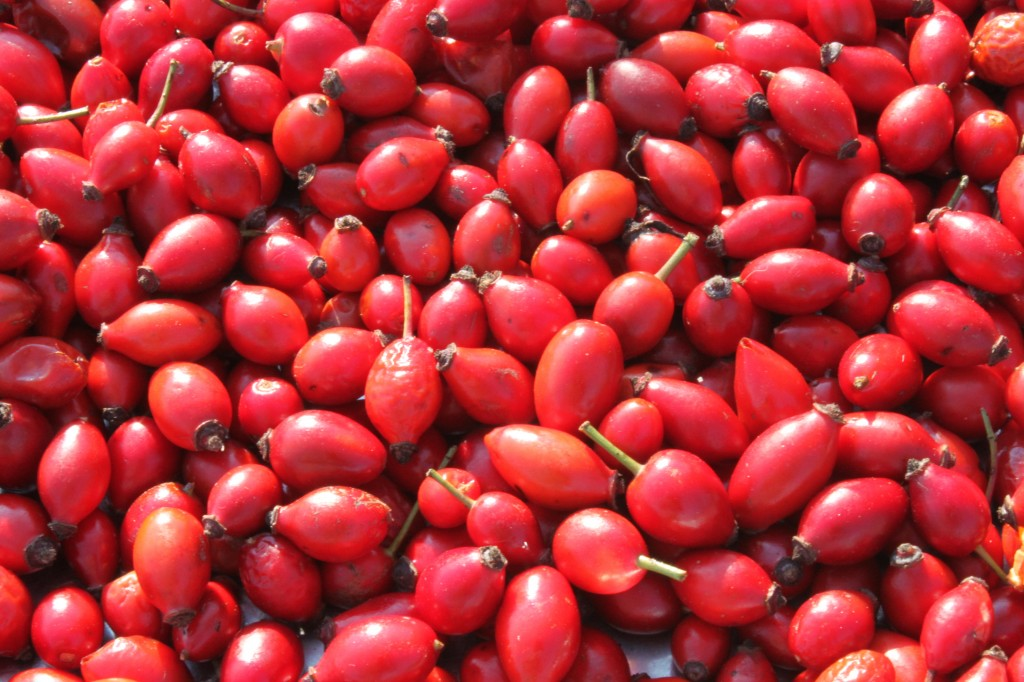 Can Rosehip Oil Treat Acne Yabibo Com