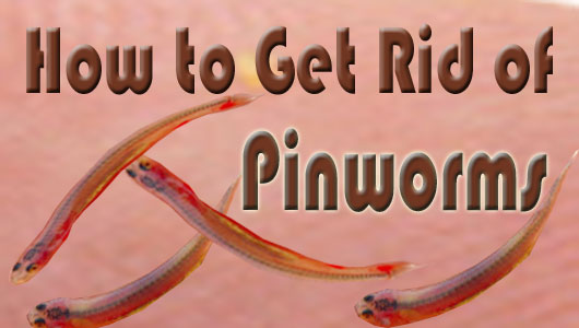 Pinworms In Adults Natural Remedies