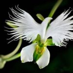 Beautiful Orchid Flowers In The World