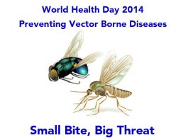 World Health Day 2014 - Preventing Vector Borne Diseases