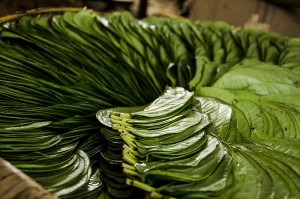 10 Health benefits of chewing Betel leaves 300x199 - 10 Health benefits of chewing Betel leaves