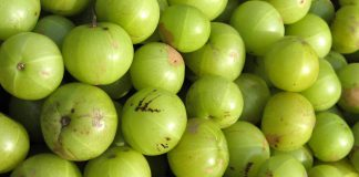 Usage of Amla for Hair Loss