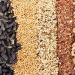 9720799 cereal grains and seeds rye wheat barley oat sunflower flax 150x150 - Health Benefits of Rye Seeds