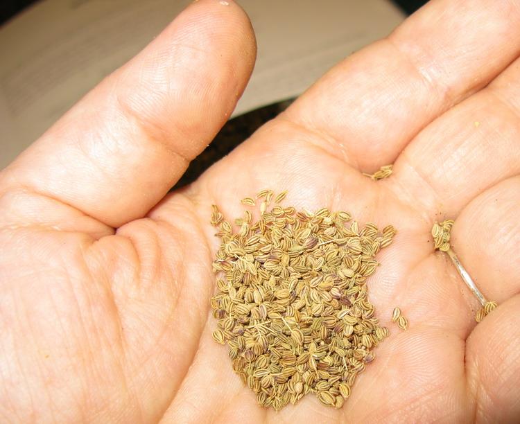 Health benefits of ajwain or carom seeds