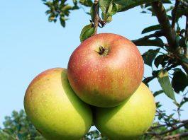 10 health benefits of apple
