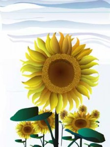 2402408450 f8e08e452c o 224x300 - 7 reasons sunflower oil scores high as a healthy oil