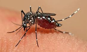 indexfgf - Symptoms treatment and Causes Of Dengue fever
