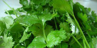 12 amazing health benefits of Coriander leaves
