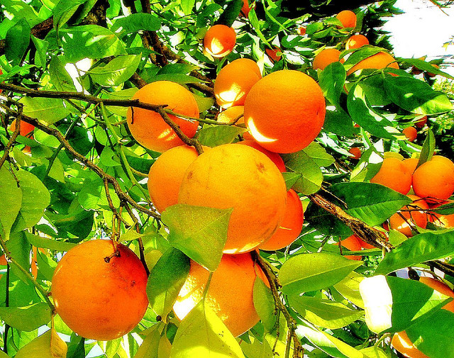 top 10 health benefits of Oranges