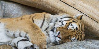 Is sleeping too much bad?