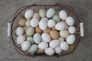 Symptoms of egg allergy in Children