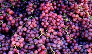 36937322 57802b31d1 z 300x176 - Grapes For Weight Loss
