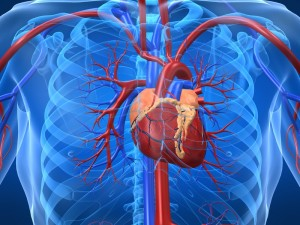 heart disease 300x225 - These Habits Can Damage Your Heart