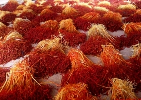 saffron crop - Ways To Use Saffron For Health