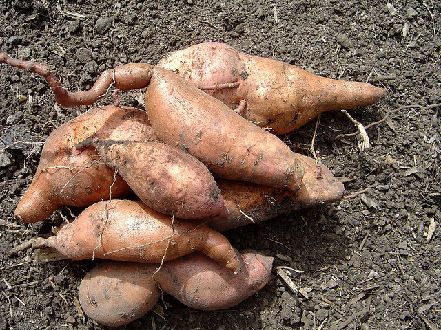 10 Reasons To Have Sweet Potatoes In Diabetes