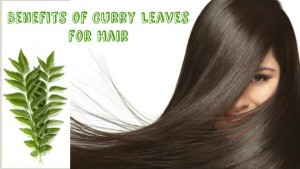 Curry Leaves For Hair 300x169 - How To Use Curry Leaves For Skin and hair?