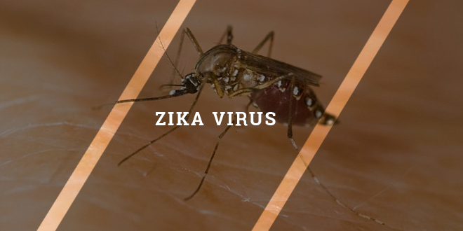 Eight best ways to avoid Zika virus infection