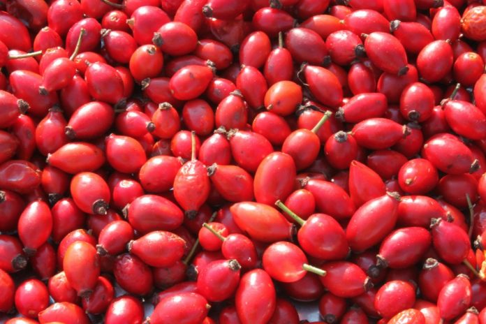 Can Rosehip Oil Treat Acne-1