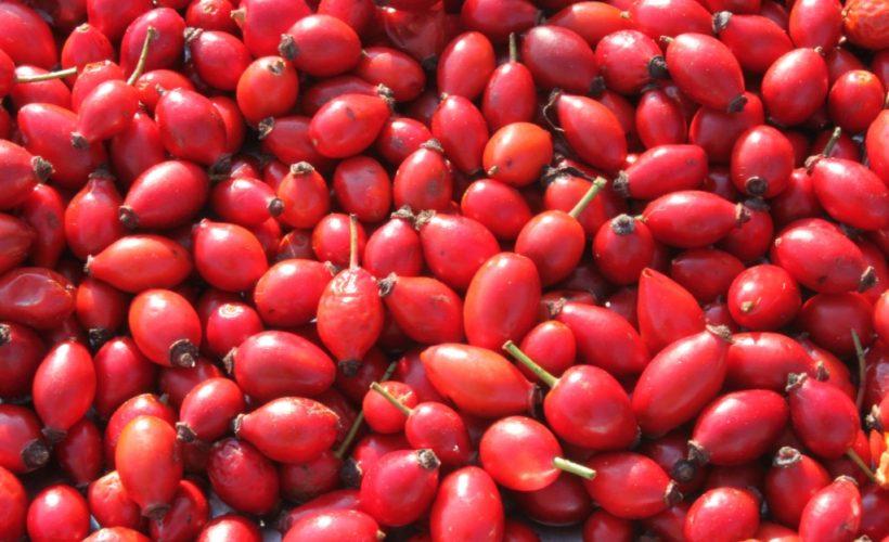 Can Rosehip Oil Treat Acne-1