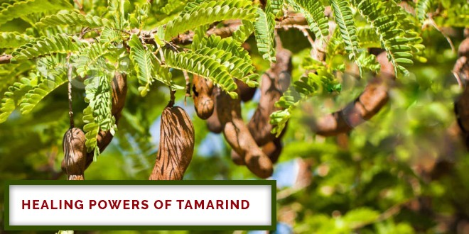 Healing Powers Of Tamarind