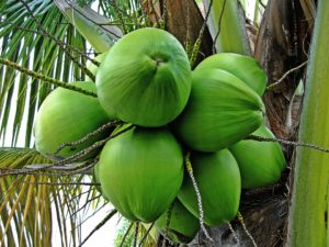 medicinal values of Tender coconut water