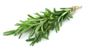 14 25 39 484 rosemary sprig Medium  300x173 - 13 Effective Health Benefits Of Rosemary Herb