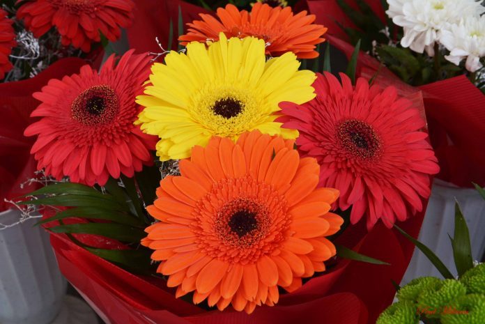 Pretty and beautiful flowers for you