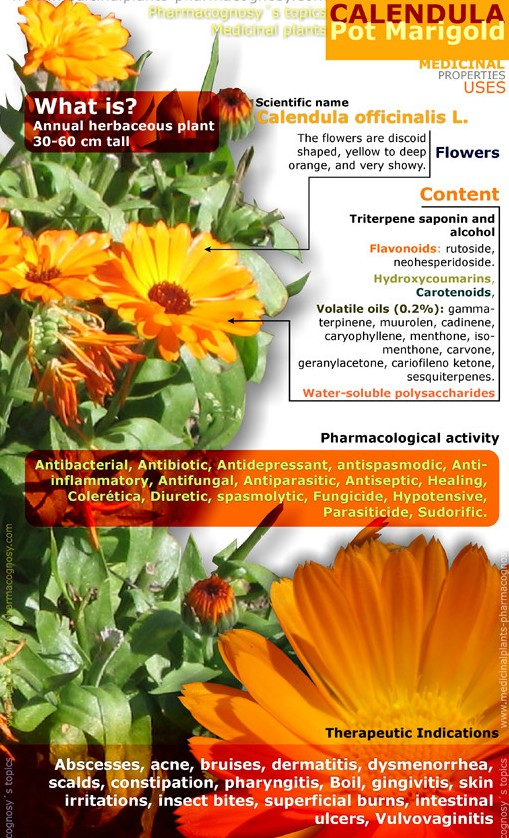 1374277466 - Surprising Health Benefits Of Calendula