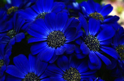10 Most Beautiful Blue Flowers In The World - Yabibo.com