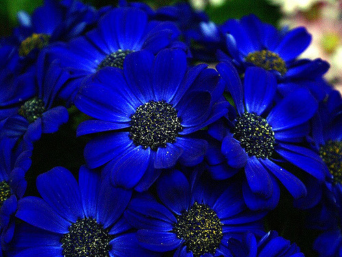 10 most beautiful blue flowers in the world yabibo - Plants that help you sleep natures soothing effect ...