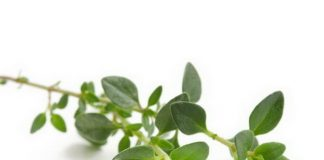 Amazing Health Benefits Of Thyme