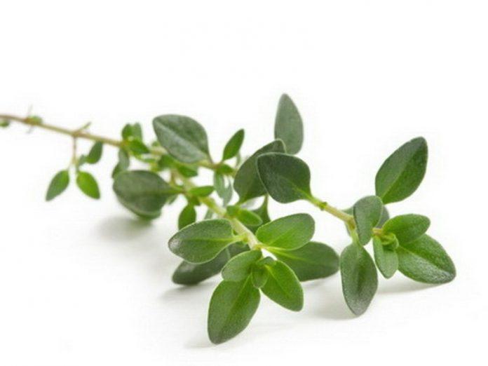 Amazing Health Benefits Of Thyme