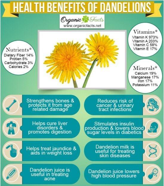 infographic053 - Amazing Health Benefits Of Dandelion