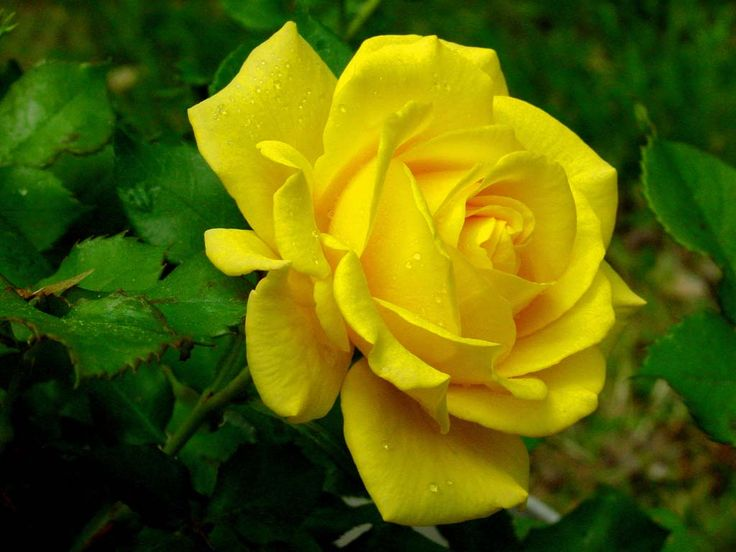 cd32d4f81f4c79c1cc6b9757650fde10 - Top 15 Beautiful Yellow Flowers In The World