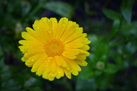 marigold 1581413 1920 - Top 10 Beautiful Marigold Flowers