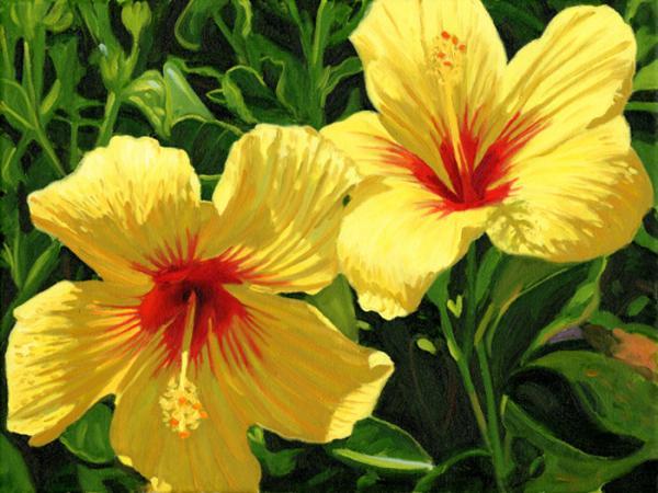 yellow hibiscus steve simon - Top 15 Beautiful Yellow Flowers In The World