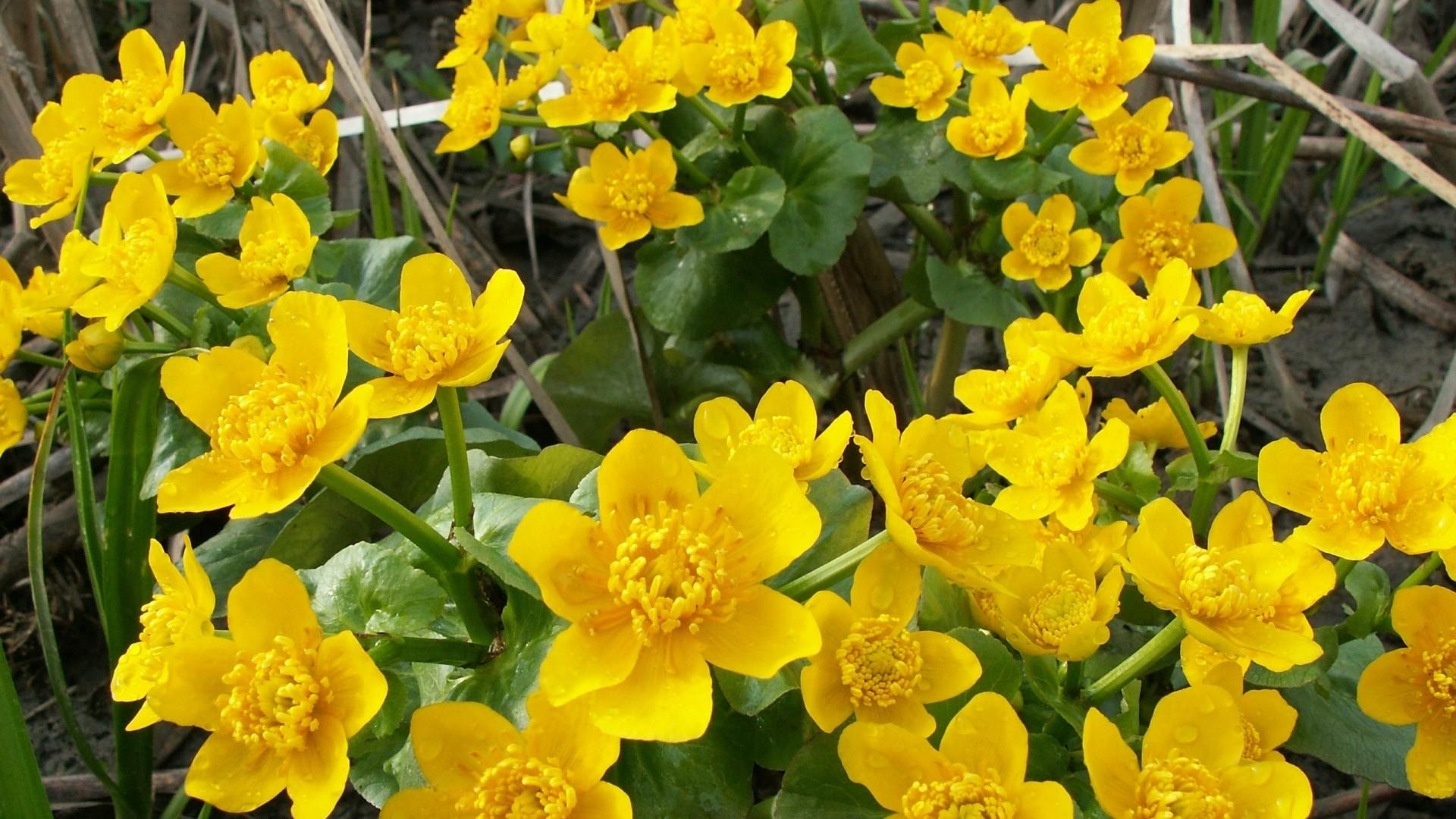 Top 15 Beautiful Yellow Flowers In The World Yabibo