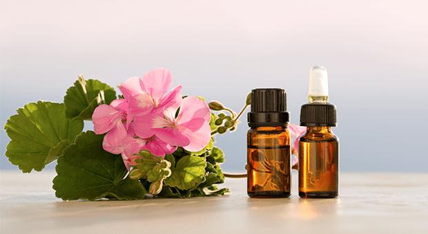 Geranium Essential Oil - 10 Amazing Health Benefits of Geranium Essential Oil