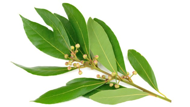 Top Five Reasons To Include Bay Leaf To Your Diet