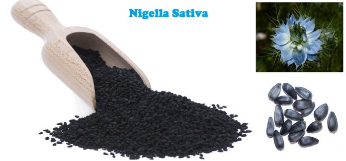 Health Benefits and Uses of Nigella Sativa