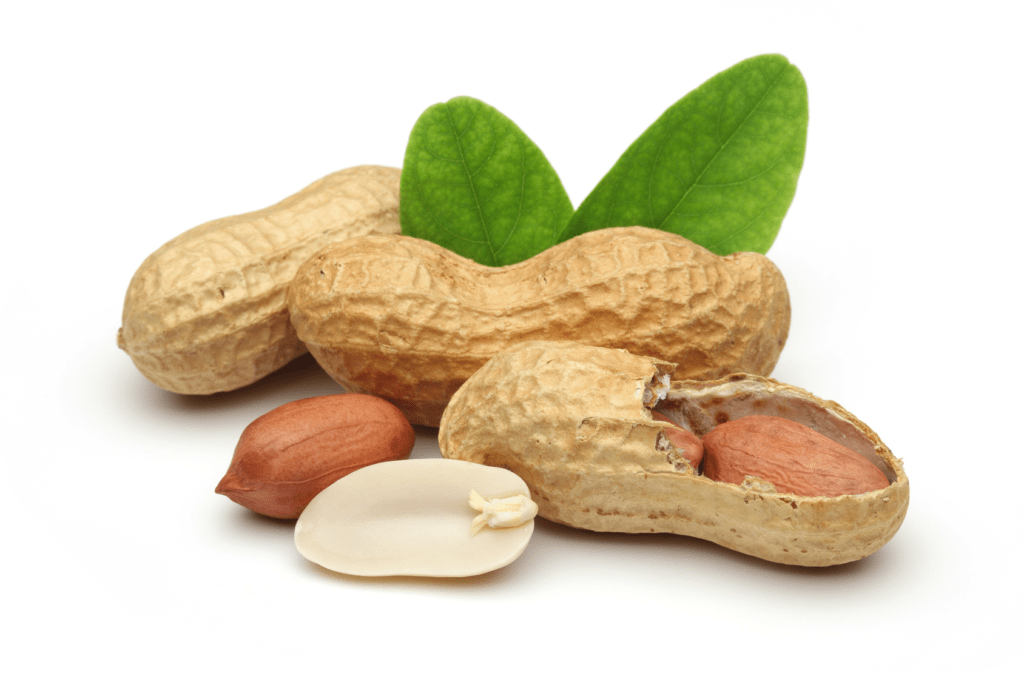 Peanuts 1 1024x682 - Amazing health benefits of peanuts