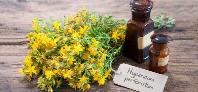 Wonderful Benefits Of Rue Herb For Hair, Health, and skin