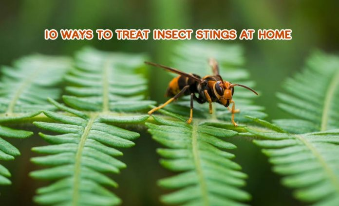 10 Ways to Treat Insect Stings at Home