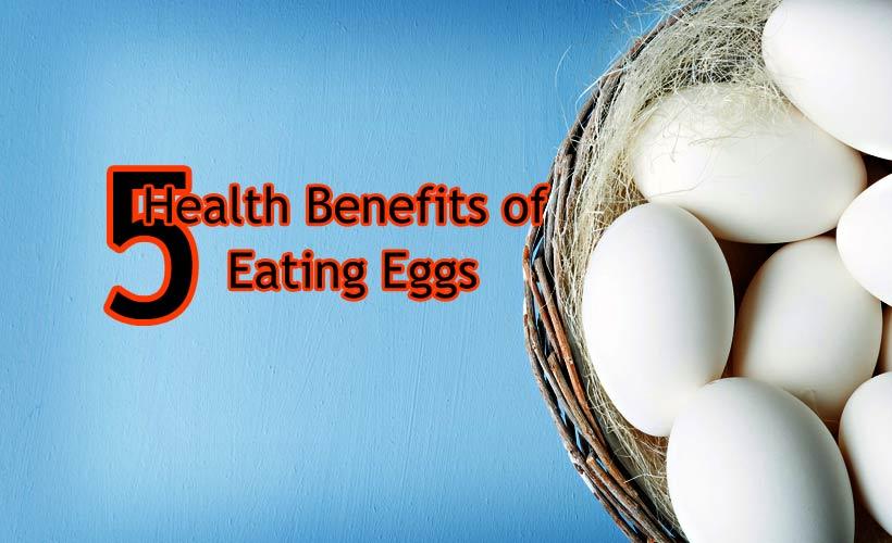 Top 5 Health Benefits of Eating Eggs - Top 5 Health Benefits of Eating Eggs