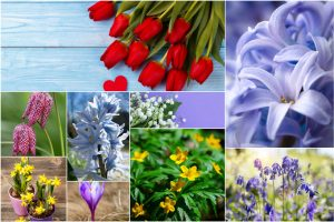 Top 10 Spring Flowering Bulbs 2 300x200 - Top 10 Spring Flowering Bulbs
