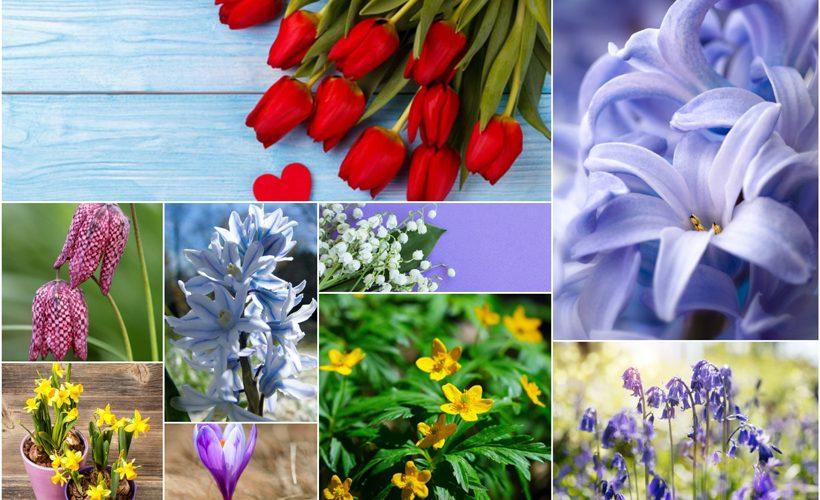 Top 10 Spring Flowering Bulbs 2 820x500 - Top 10 Spring Flowering Bulbs