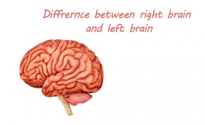 What's the Difference Between the Right Brain and Left Brain?