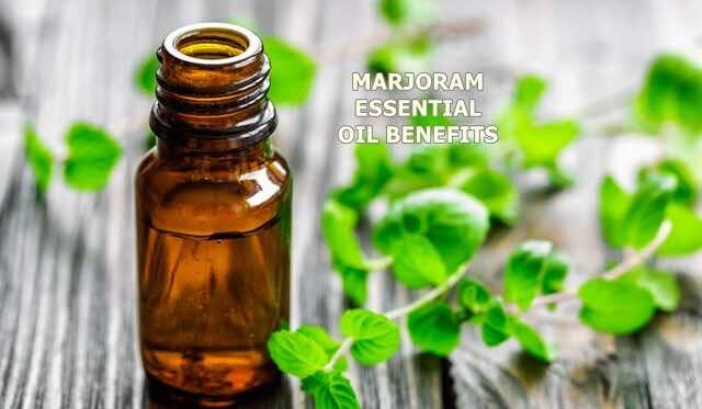 23 Surprising Benefits of Marjoram Essential Oil