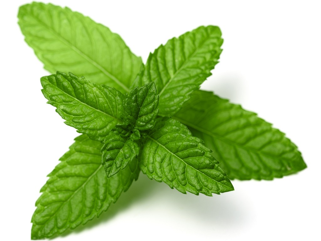 peppermint 1 - 13 Impressive Benefits of Mint