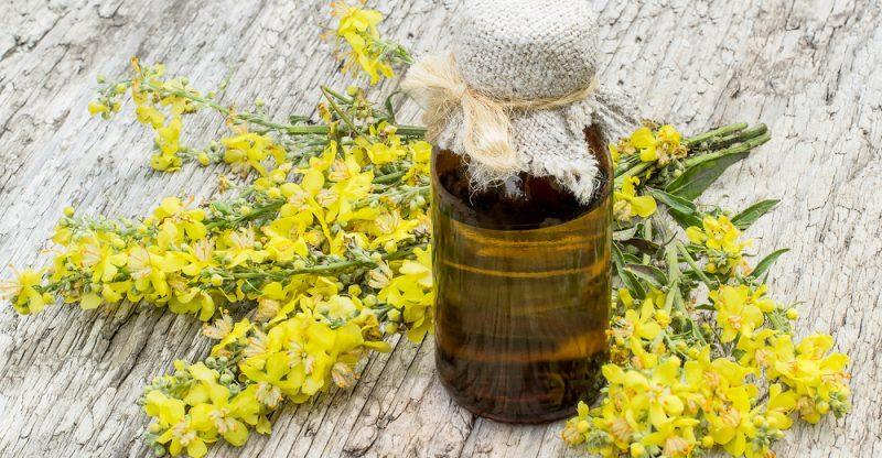 10 Amazing Benefits of Mullein Essential Oil